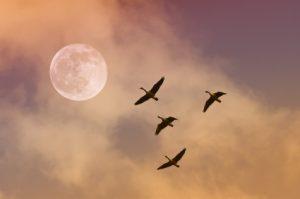 Full Moon Meditations with Tara Brennan